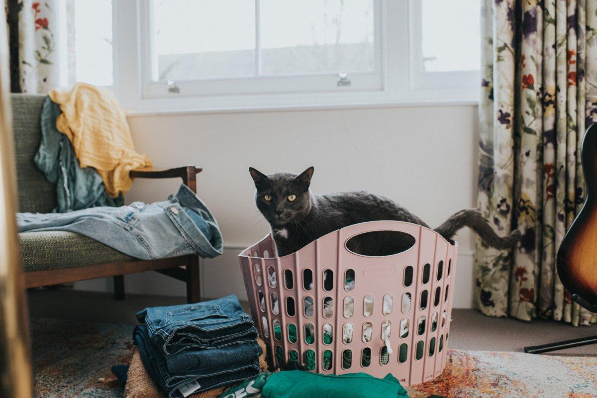 Pets at Home - Common Era