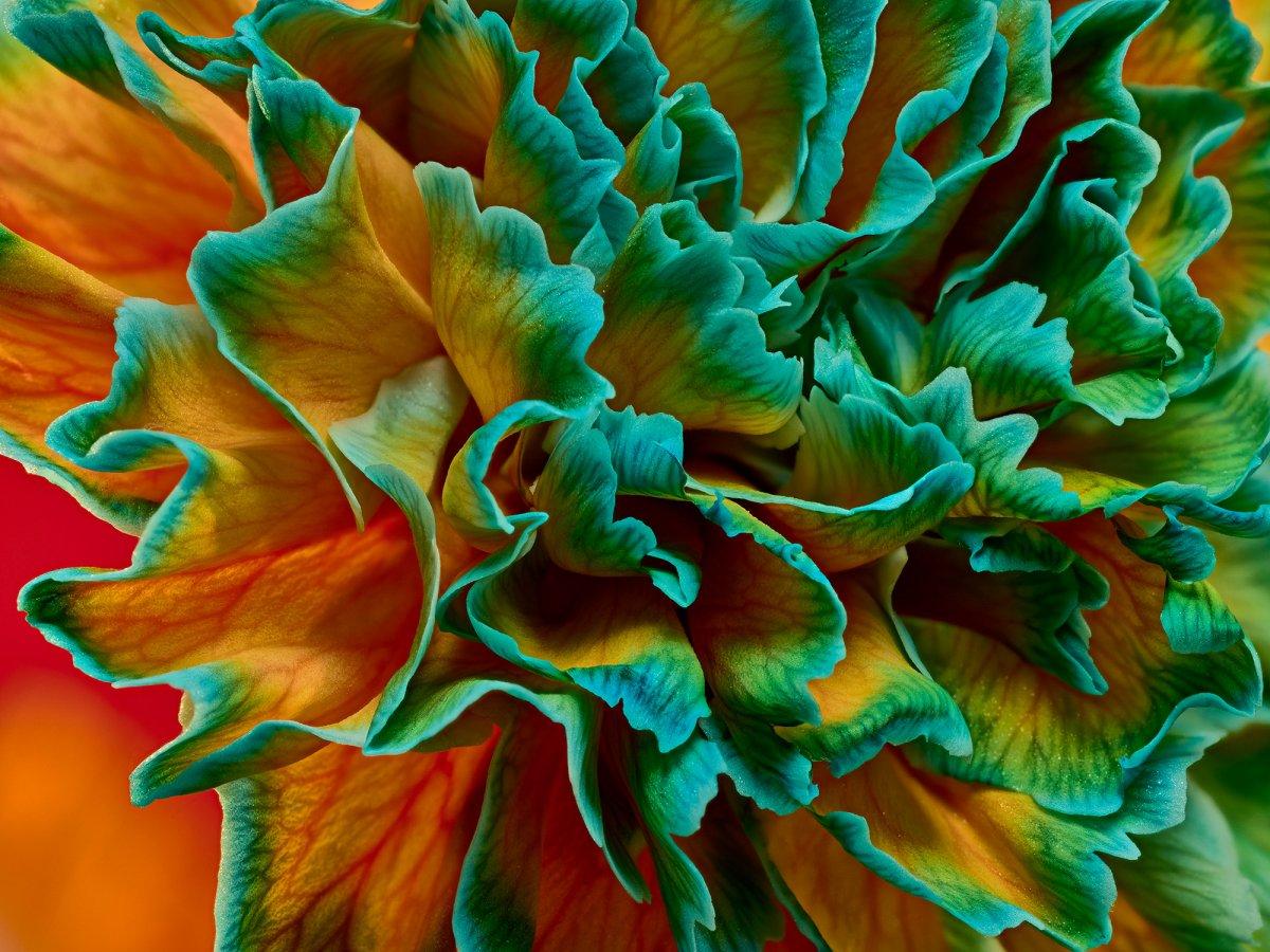 Floral Dreamland - Common Era