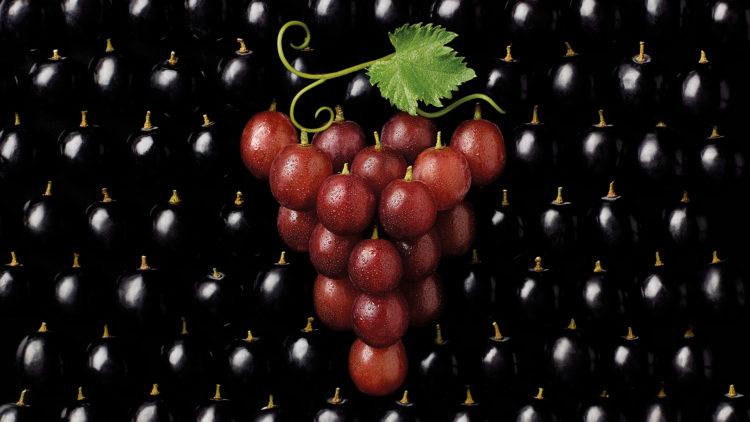 ben-monk-ms-grapes-hr